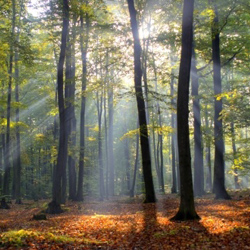 Spotlight Deal- Maximpact forestry deals achieving positive results