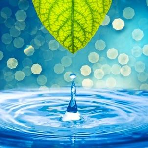 water leaf 302