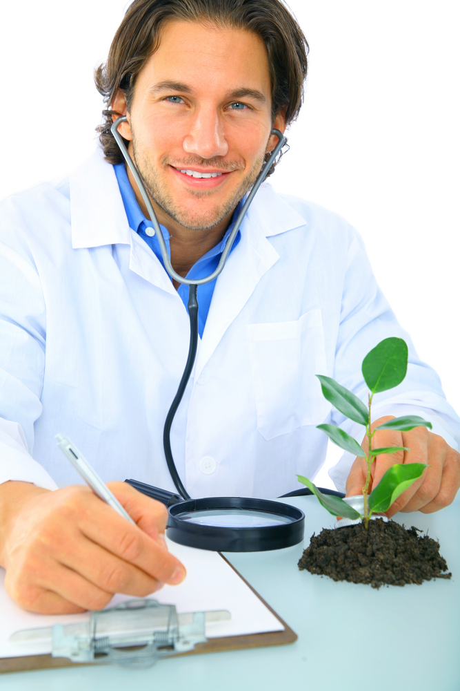 handsome doctor cares for healthy green plant