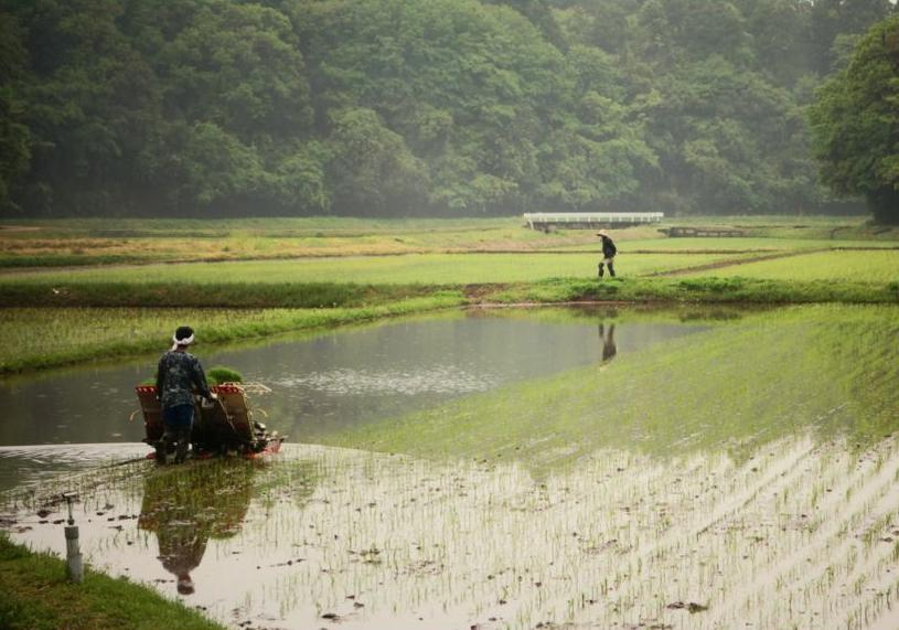 RicePlantingJapan