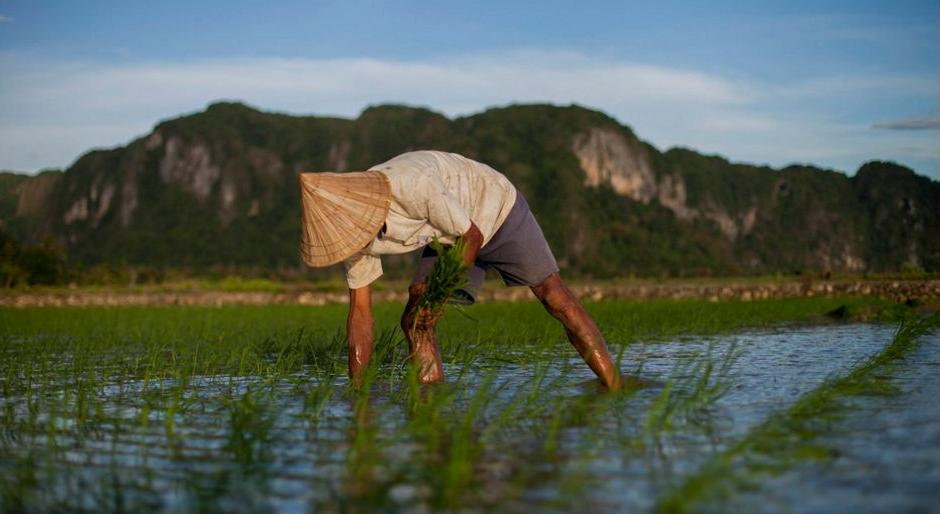 RicePlanterIndonesia