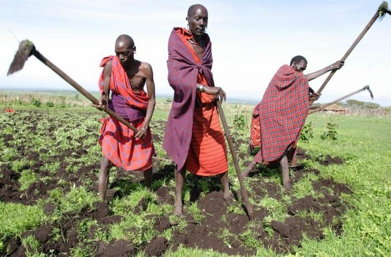TanzaniaMenFarming
