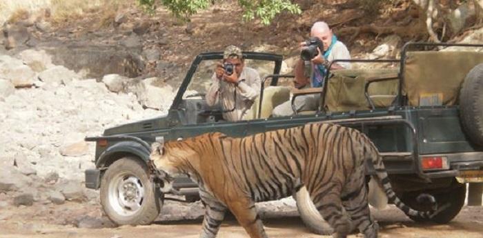 WildTigerPhotographers