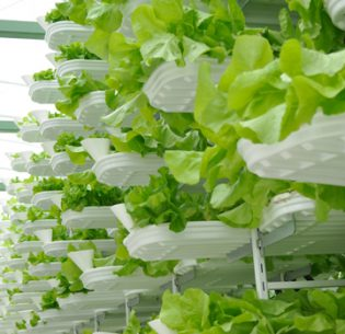 Sustainable Agriculture - Vertical Farming