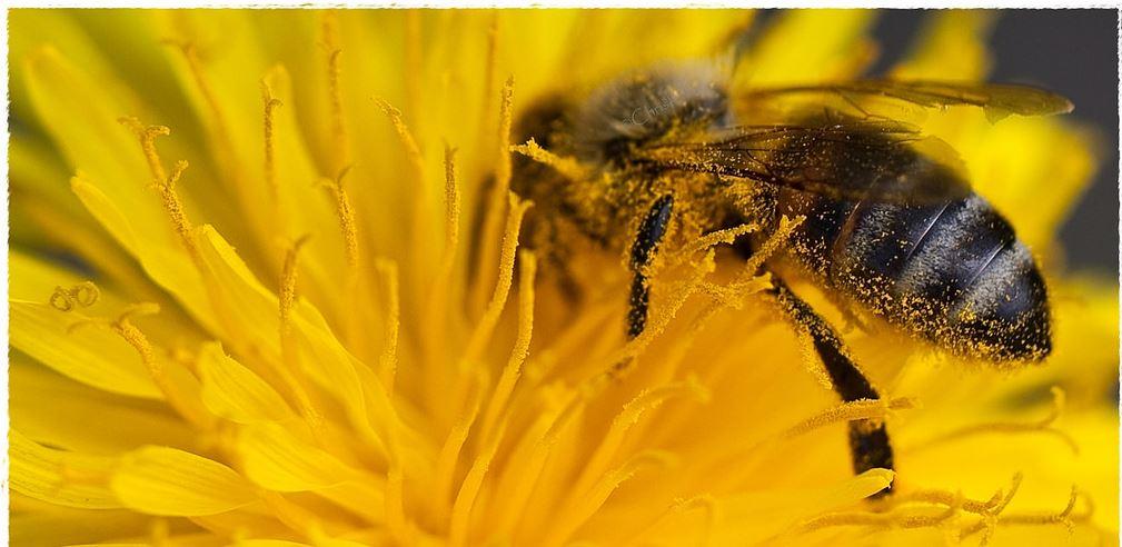 pollenbeeaustria