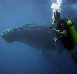 quieting-the-oceans
