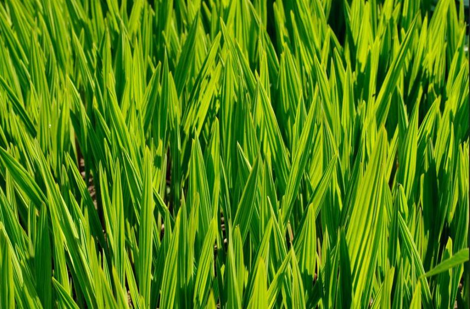 greenshootsengland