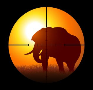 57158629 - silhouette illustration of a hunter targeting an elephant