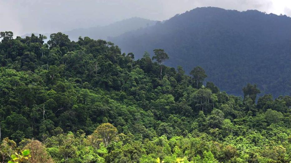 ForestIndonesia