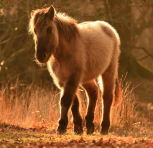 Europe Finds Funds for Rewilding_pony