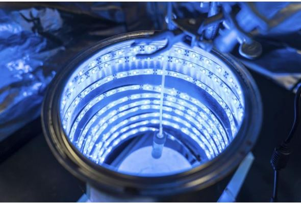 At the University of Central Florida, Professor Fernando Uribe-Romo's blue LED photoreactor breaks down CO2. (Photo by Bernard Wilchusky / UCF) Posted for media use
