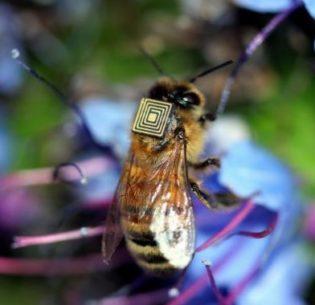 BeeWithSensor