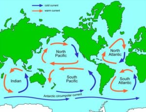 Map of the five ocean gyres of the world where ocean plastic accumulates. (Map by The University of Waikato) Posted for media use