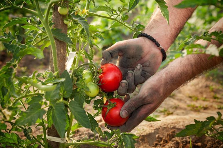 Harvesting.134020