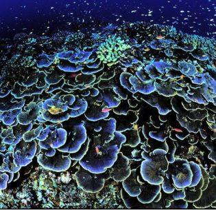 A healthy reef in Jarvis Island National Wildlife Refuge, located 1,305 nautical miles south of Honolulu. (Photo: U.S. Fish and Wildlife Service) Public domain.