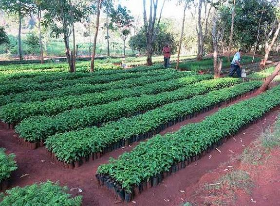 "A tree nursery in the Mtendeli refugee camp, Tanzania (Photo by Arturo Gianvenuti) Published in the handbook ""Managing forests in displacement settings."""