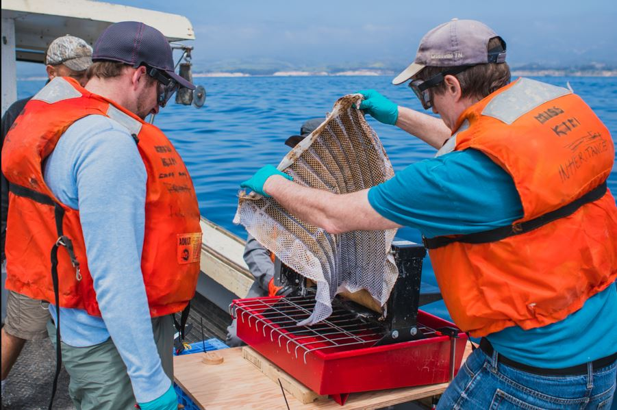 A team of Argonne National Lab researchers successfully tested the Oleo Sponge off the coast of Southern California in April 2018. (Photo by Argonne National Laboratory) Posted for media use