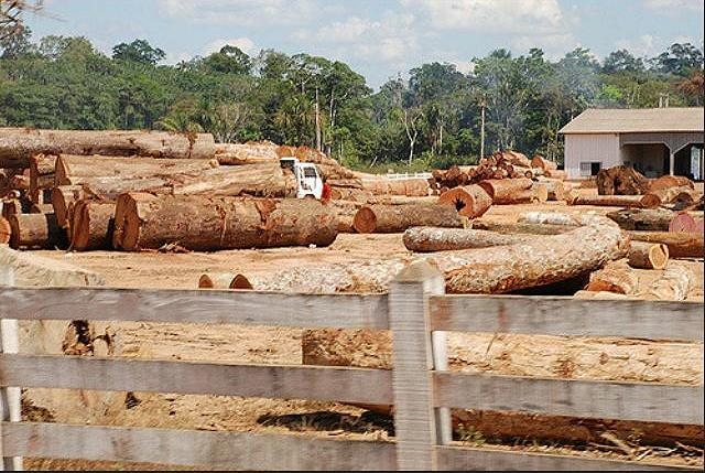An illegal timber site in the state of Rondonia, Brazil, July 6, 2007 (Photo by Joelle Hernandez) Creative Commons license via Flickr
