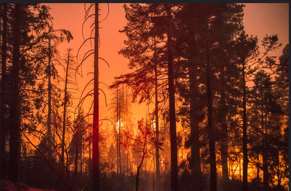 The Ferguson Fire burns in California's Sierra National Forest and Yosemite National Park. August 8, 2018. (Photo courtesy U.S. Forest Service Pacific Southwest Region 5) Public domain