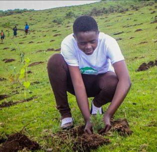 PlantingMauForest