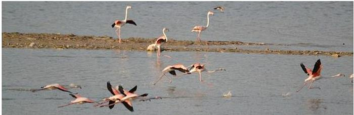 Flamingoes have returned to Lake Karla. (Photo by Ecotourism Greece) Posted for media use
