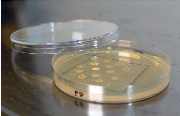 In VTT's PlastBug projects, microbes are being screened through a three-stage process. (Photo courtesy VTT) Posted for media use