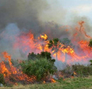 FloridaWildfire