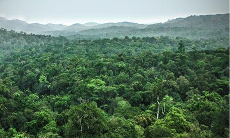 An intact portion of the world's second largest rainforest, after the Amazon, is protected in Democratic Republic of Congo's new Lomami National Park, part of which is in Tshuapa province. Date unknown (Photo courtesy Congo National Parks) Public domain
