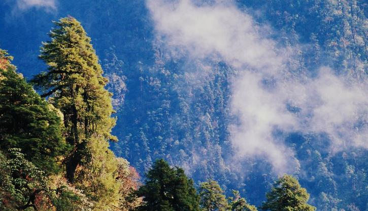 India's Khangchendzonga National Park in the state of Sikkim covers a unique diversity of plains, valleys, lakes, glaciers and spectacular, snow-capped mountains covered with ancient forests. Khangchendzonga National Park is inhabited by nearly half of India's bird diversity, wild trees, orchids and rhododendrons and one third of the country's flowering plants. But the indigenous traditional knowledge of local plants and the local ecosystem is on the verge of disappearing. January 9, 2015 (Photo by USAID) Public domain
