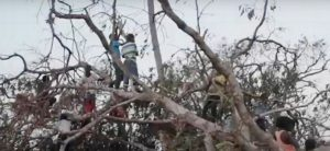 "Child survivors of Cyclone Idai stranded in trees to escape the flood waters. April 2019 (Screengrab from video ""Cyclone Idai: In Mozambique a Fight for Survival"" courtesy UN High Commission for Refugees) Posted for media use"