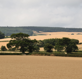 Parched fields in Somerset, England, August 6, 2018 (Photo by Steve Keiretsu) Creative commons license via Flickr.