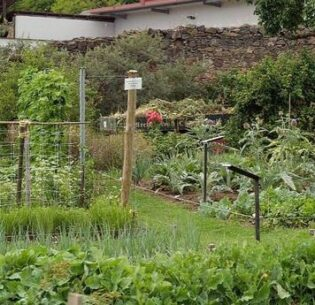 Each year a bunch of heritage varieties of vegetables and fruits are grown in this backyard garden. July 31, 2010, Schiltern, Niederösterreich, Austria (Photo by Brigitte Rieser) Creative Commons license via Flickr